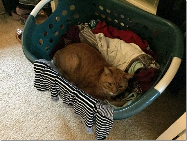 cat on clean clothes